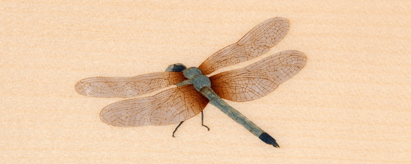 Bösendorfer 200 Dragonfly